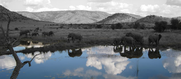 Pilanesberg Game Reserve In North West Province - South Africa.
